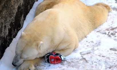 GIGABYTE Challenge #9: Virtus.pro Polar проигрывают