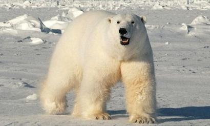 D2L: Virtus.pro Polar продолжают лидировать