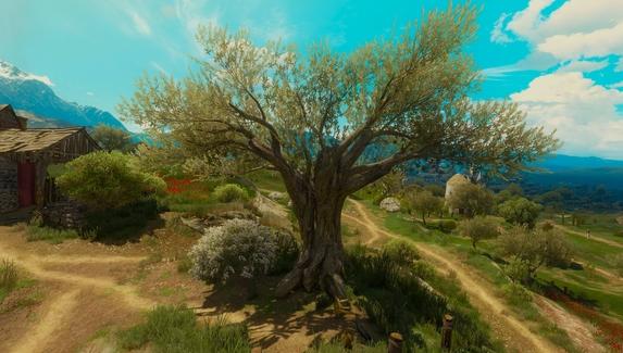 Вековые деревья в Польше назвали в честь персонажей «Ведьмака»