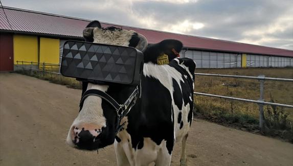 Российские коровы будут пастись в виртуальной реальности