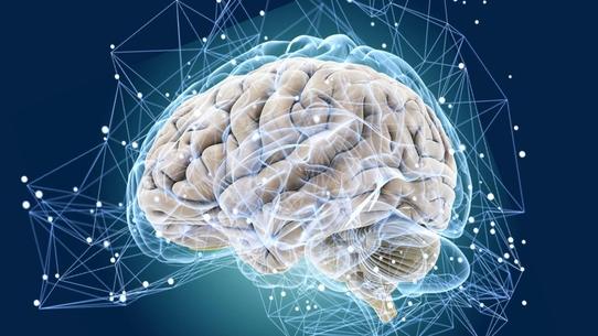 Мозг - инструкция по применению