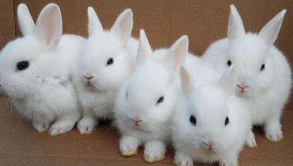Конгрессмен США признался, что незаконно тратил деньги на игры в Steam и авиабилеты для кроликов