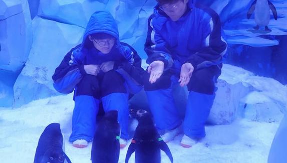 Киберспортивный инстаграм: пингвины, дельфины и Faker
